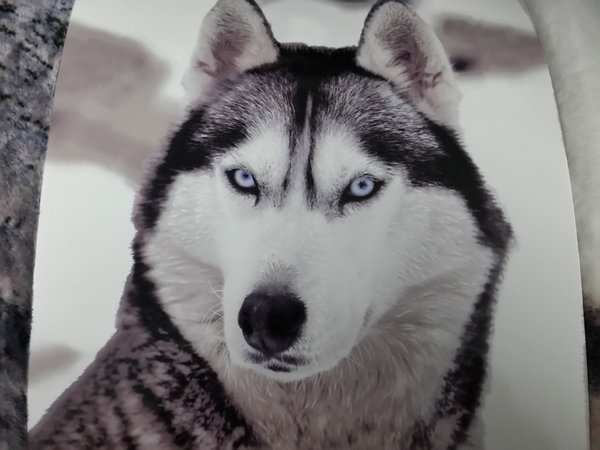 3D print Siberian Husky flannel throw / blanket