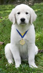 AKC S.T.A.R. Puppy 6 Week Class- January 8th