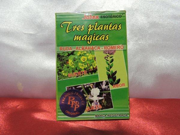 Tres Plantas Magicas - Three Magic Plants