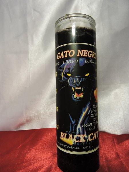 Gato Negro - Black Cat
