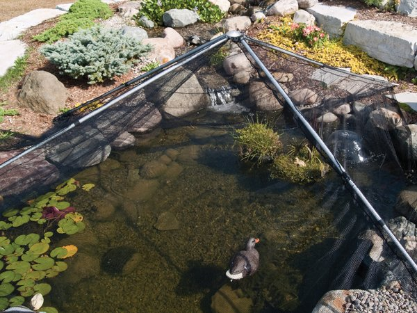 how to protect fish pond from cats