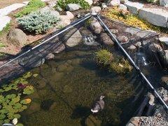 Pond Net Fish Protection Pyramid Guard Grid Cats Heron