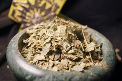 1 oz Calea Zacatechichi Dream Herb ternifolia