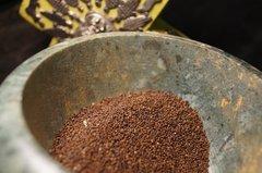 100 Holy Basil Seeds (Tulsi) Ocimum sanctum