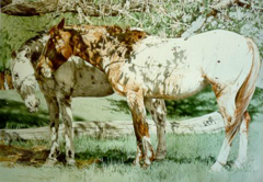 """Peeper's Ponies"" - 24x18 by Judith Angell Meyer, Limited Edition Print on Paper"