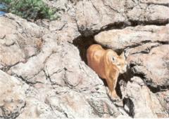 """Canyon Spirit"" - 7 x 5 Original Watercolor"