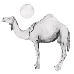 BEATRICE FORSHALL: CAMEL