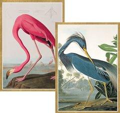 Caspari : Audubon Birds Boxed Note Cards - 8 per package