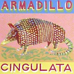 ALICE PATTULLO : A IS FOR ARMADILLO