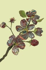 JENNY CAPON: CHELSEA FLOWERS