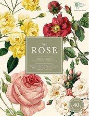 Brent Elliott : The Rose (RHS)