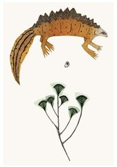 BEATRICE FORSHALL: GREAT CRESTED NEWT