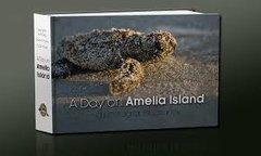 A Day on Amelia Island
