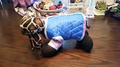 The Blue OX Boutique, Small Breed Coats