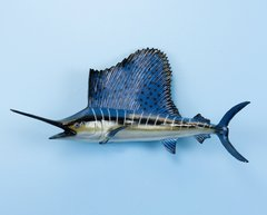 "Sailfish 23"" Fish Mount"