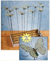 Butterflies with Free Display (24 PCS SET)