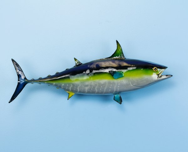"""Yellowfin Tuna 24"""" Wall Mount"""
