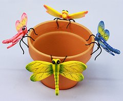 Md Dragonfly     (12 PC SET)