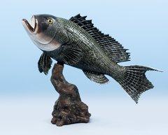 """Sea Bass 18"""""""
