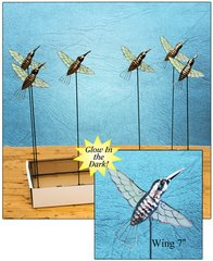 Hummingbird with Free Display (24 PCS SET)
