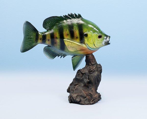 """Sunfish 12"""""""