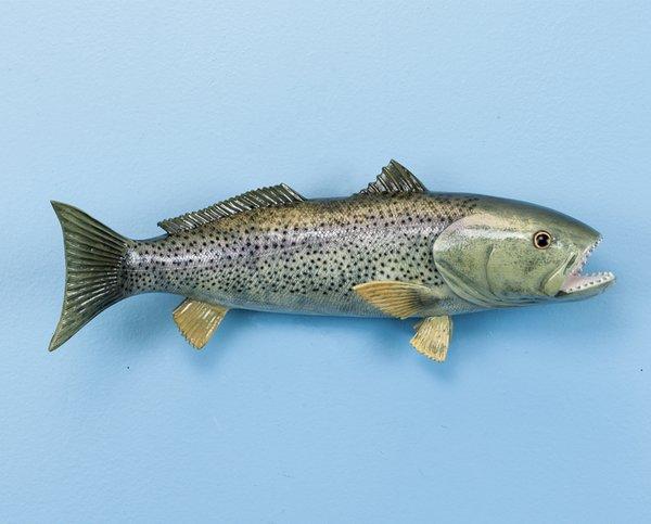 "Weakfish 14"" Fish Mount"