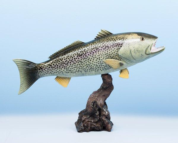 """Weakfish 20"""""""