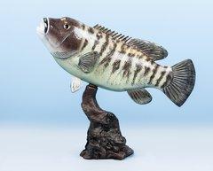 """Black Fish 19"""""""