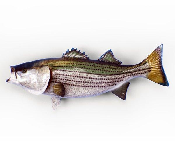 "Striped Bass 44"""