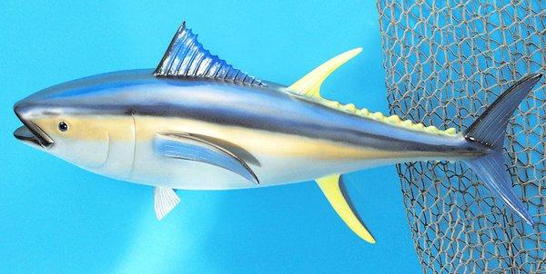 """Yellow Fin Tuna 12"""" Fish Mount"""