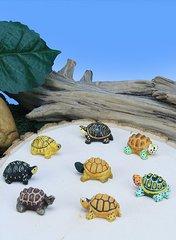 Mini Box Turtles (12 PC SET)