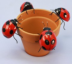 Md Lady Bug (12 PC SET)