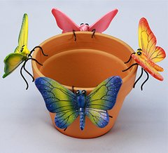 Md Butterfly     (12 PC SET)