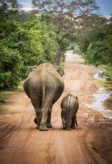 Elephant Mom & Baby