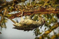Woodpecker Under Tree