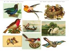 Little Birdies digital #2125