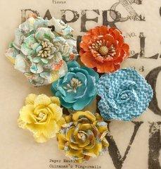 Lady Bird Roses PRIMA