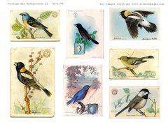 1790 Vintage Birds digital
