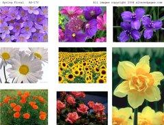 170 Spring Floral digital