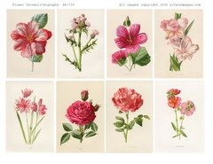 733 Flower Chromolighography Printable