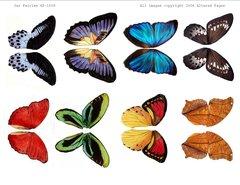 1008 Jar Fairies wings digital