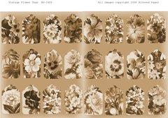 1626 Vintage Sepia Flowers