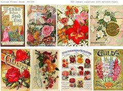 598 Vintage Flower Seed Packs Printable