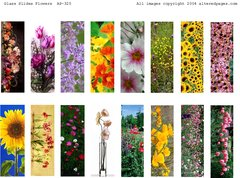 325 Floral Glass Slides Printable