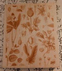 Anna Griffin Botanical 2  ca
