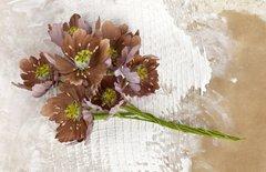 COCOA Blooms PRIMA