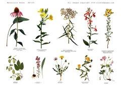 191 Watercolor Herbs digital