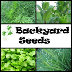 Herb 4 Pack: Coriander, Dill, Lemon Grass and Peppermint