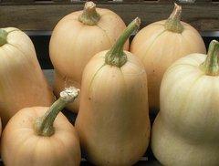 Pumpkin - Waltham Butternut