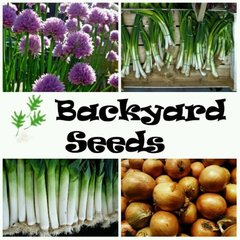 Winter Onions 4 Pack: Brown Onion, Leek, Chives and Spring Onion